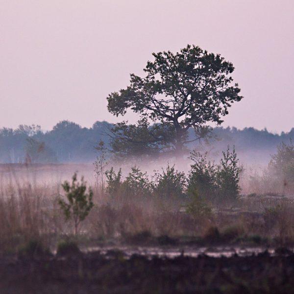 Morgens im Großen Torfmoor