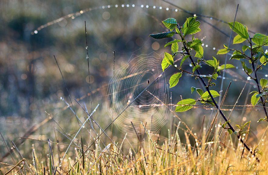 Spinnennetz im Frühjahr