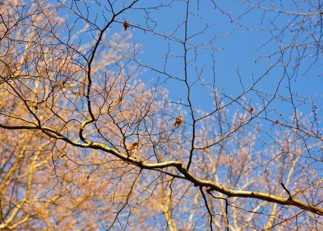 Herbstfeeling im Frühling