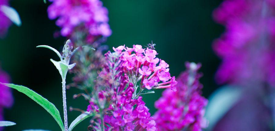 blüte-insekt