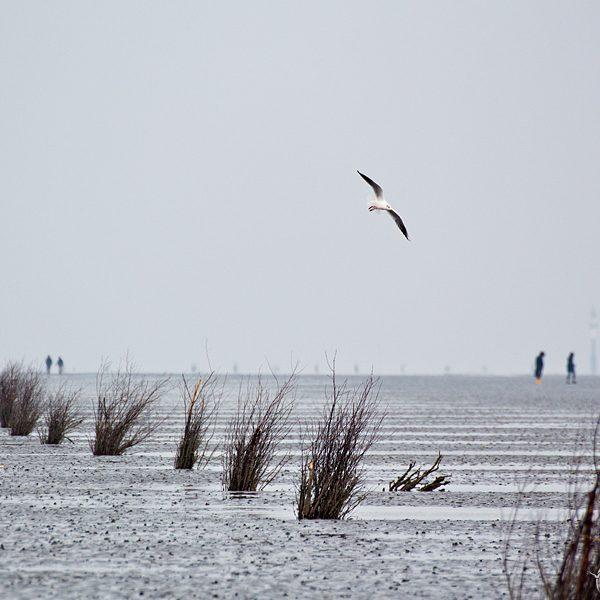 cuxhaven watt