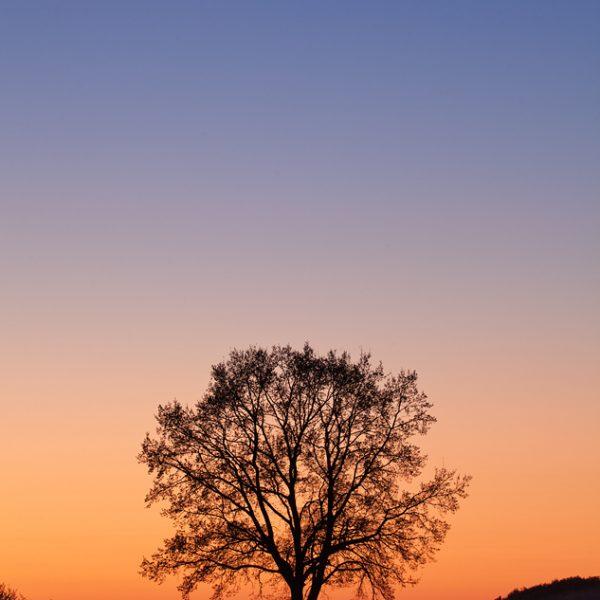 Baum vor dem Abendhimmel